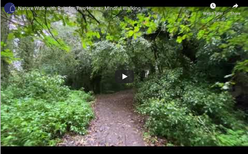 Nature Walk with Rain for Two Hours – Mindful Walking